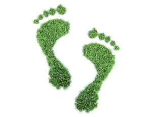 Первые шаги к тому, чтобы сделать ваш церковный приход экологически дружественным