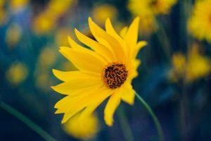 Радоница: сажаем живые цветы!